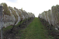 Vineyard Fruit Zone Bird Protection Netting System