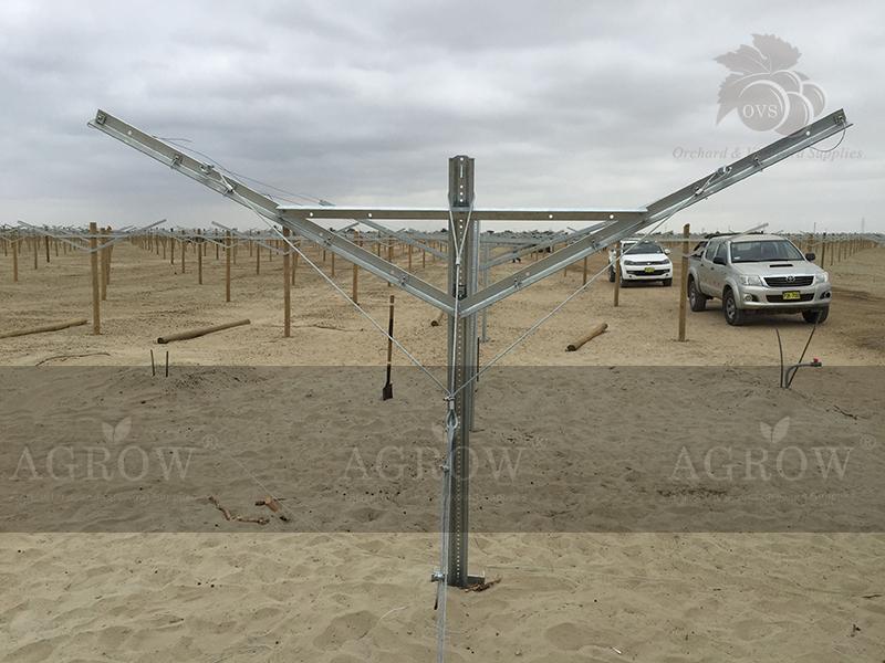 Open Gable trellis system Peru Agrow Fegurri 2015