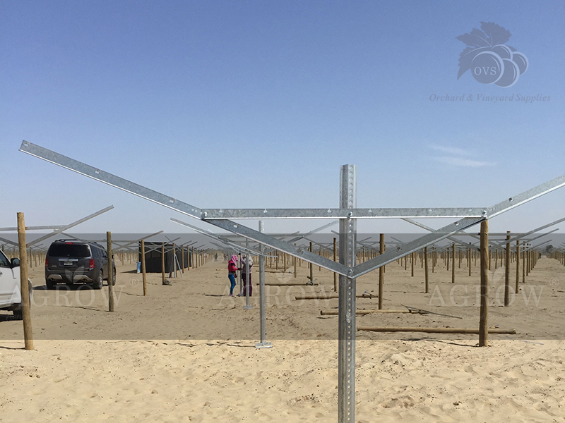Open Gable trellis system Peru Agrow 2014 Fegurri