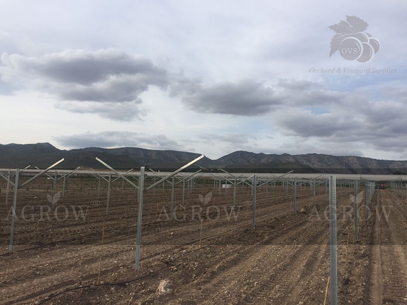 Open Gable Trellis System in Spain